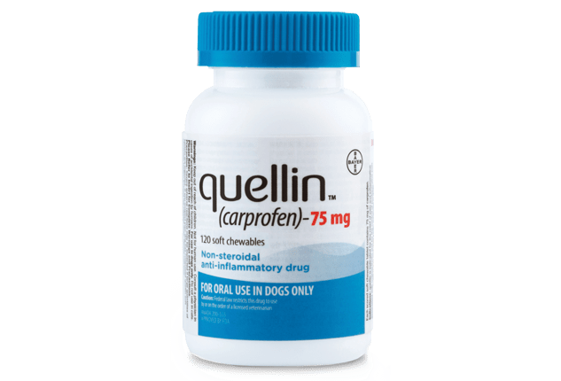 Pill bottle of quellin® (carprofen) anti-inflammatory soft chews for dogs.
