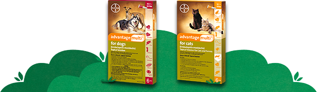 Advantage Multi® for dogs and cats package shots.