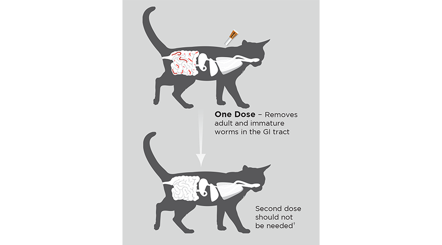 Diagram of one dose of Profender Topical Solution being applied to the back of a cat's neck to remove intestinal parasites from the GI tract.